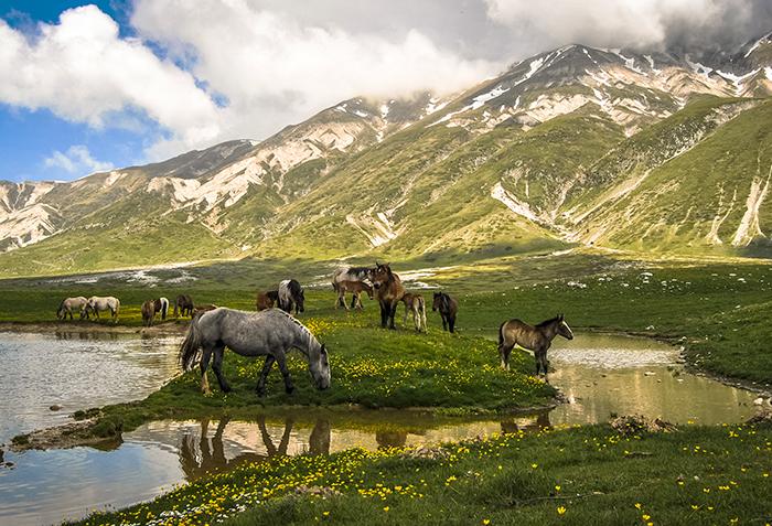 Pferde Campo Imperatore Abruzzen Tour