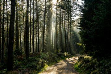 700 deutsch trees