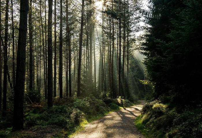 Bei der Sachsen Bike Tour von Dresden bis Görlitz durchqueren Sie auch sonndurchflutete Wälder.