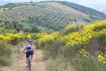 ALPStours-Oliven-Trail-Umbr